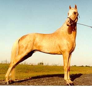 horse geno type generator